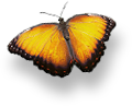 anim_butterfly_01.png (1)