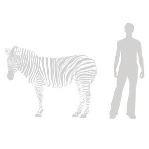 Relative to 6ft (2m) man