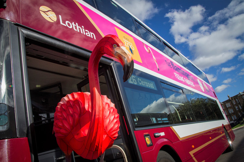 Lothian flamingo bus - official transport partner of RZSS Edinburgh Zoo