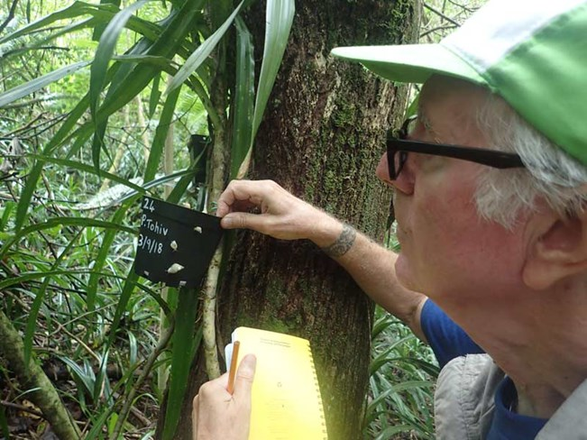 Dr Trevor Coote releasing Partula snails