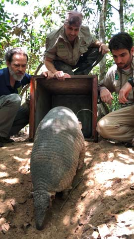 The Giant Armadillo Project team release a giant armadillo back into it's burrow