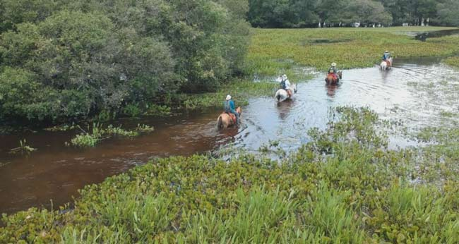 Travelling by horseback in the flooded Pantanal