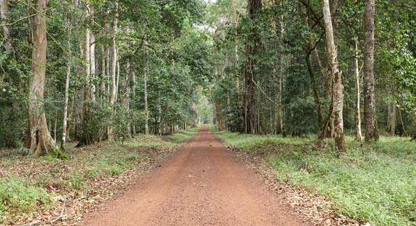 Royal Mile in the Budongo Forest