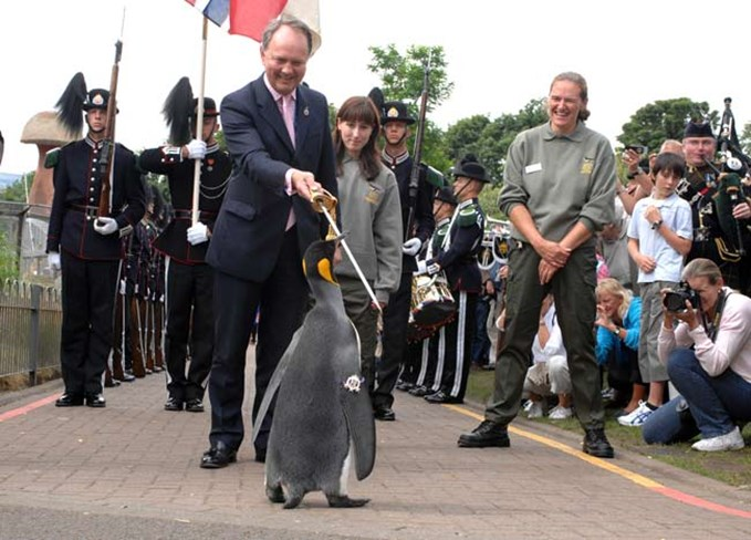 Sir Nils Olav receiving his Knighthood at Edinburgh Zoo from the Norwegian Guard