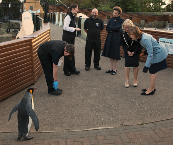 HRH The Princess Royal met the world's only knighted penguin